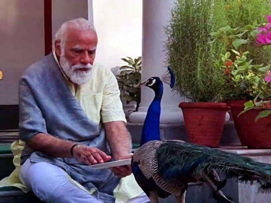 Narendra Modi with peacock