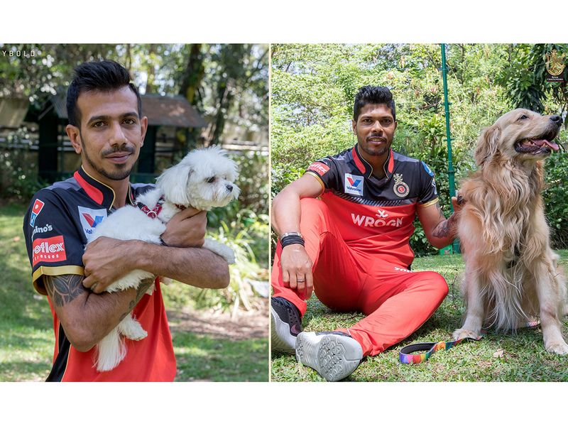 RCB's Yuzvendra Chahal and also got a canine cuddle, to make up for the lack of human contact while they are in isolation in Dubai.