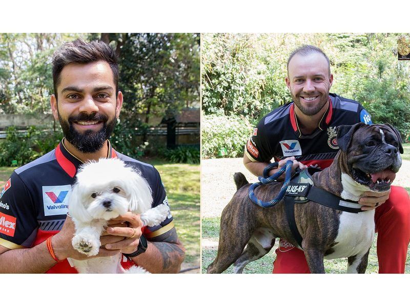 Royal Challengers Bangalore stars also hailed their furry friends as skipper Virat Kohli and South African AB De Villiers were snapped with their four-legged friends.