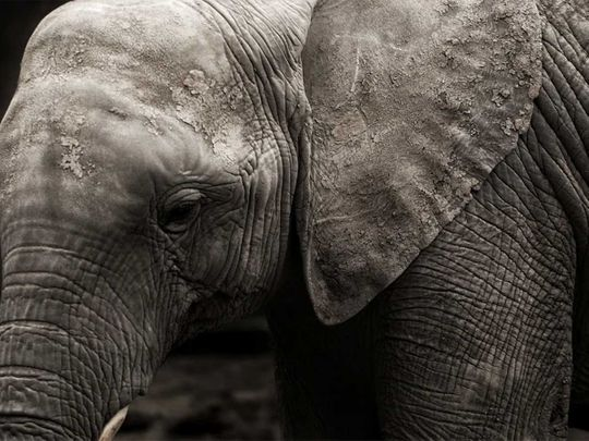 20200827 elephant