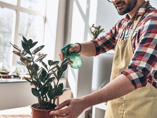 House-plants-thrive_Black-Thumb_iStock-954602746