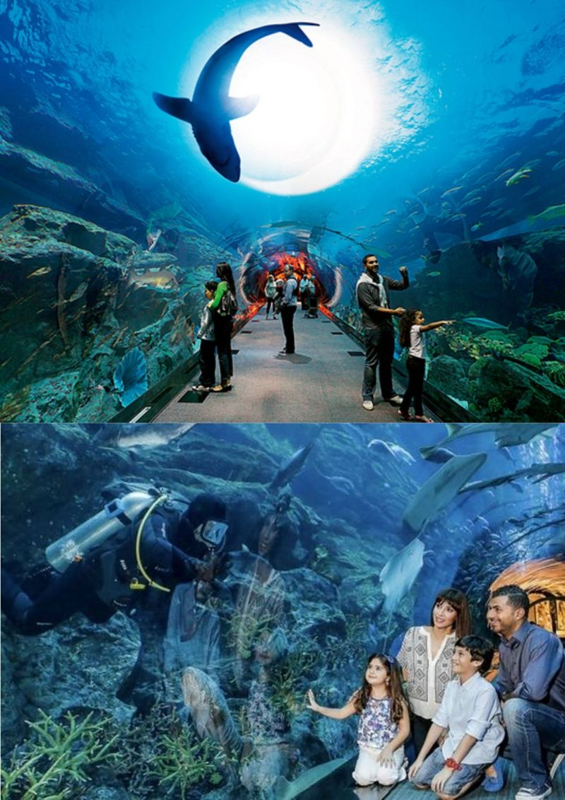 DUBAI AQUARIUM AND UNDERWATER ZOO: