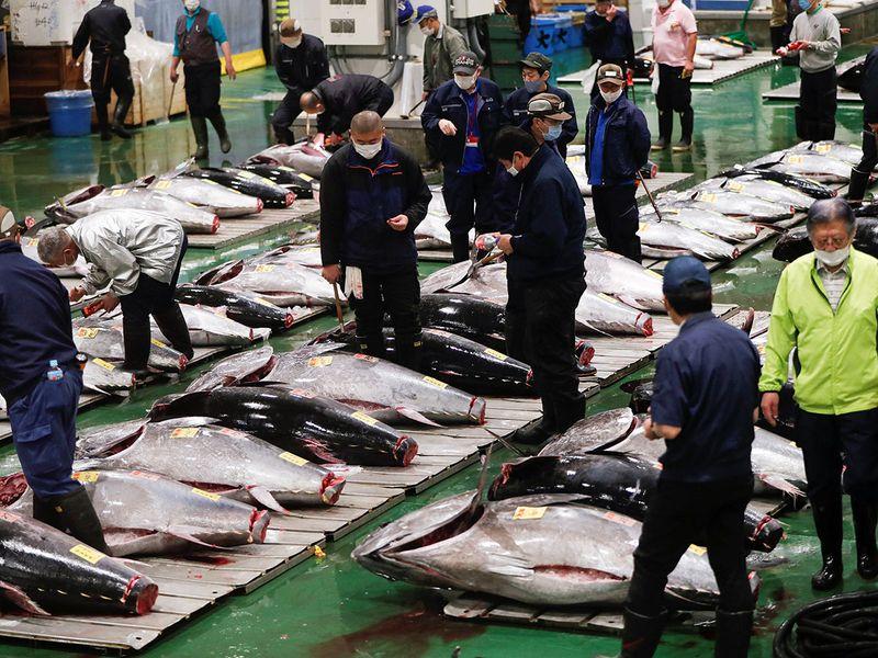Japan tuna gallery
