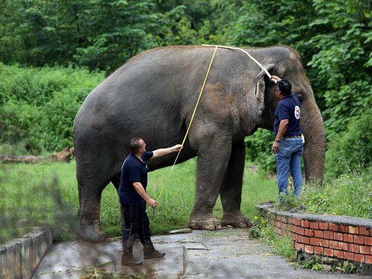 Kaavan elephant Pakistan