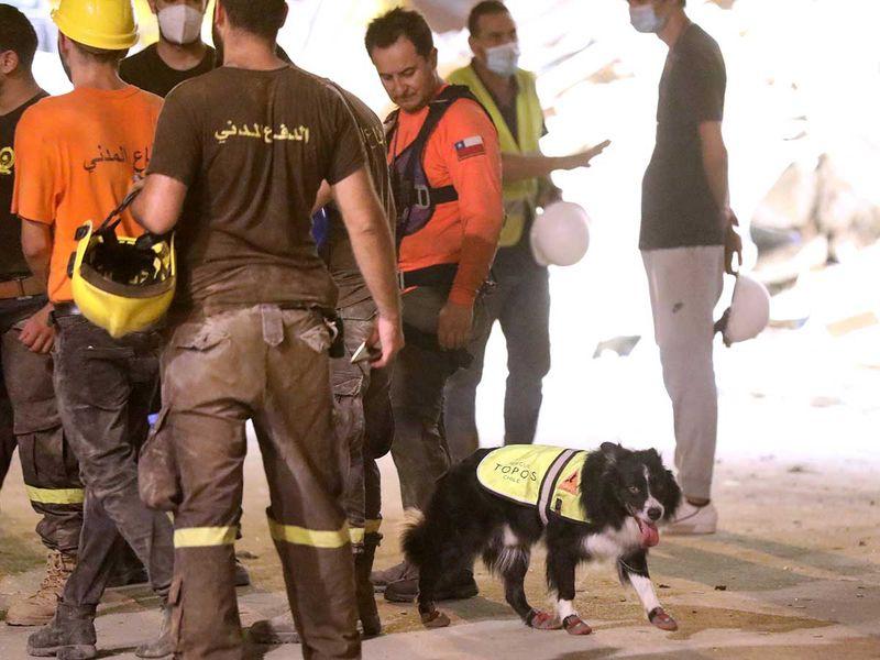 Beirut blast survivors search