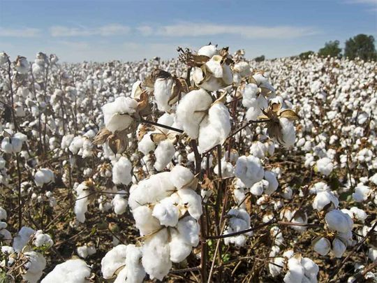 20200909 top news cotton generic