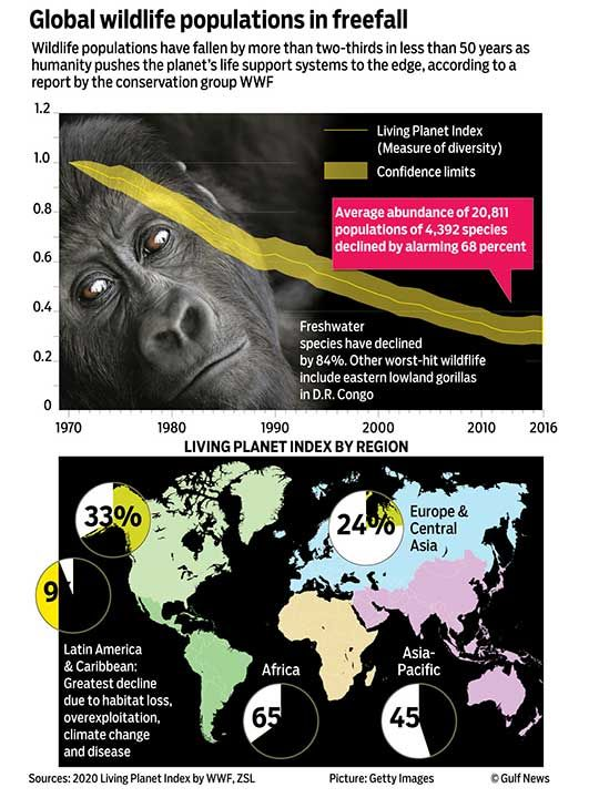 Global wildlife graphic