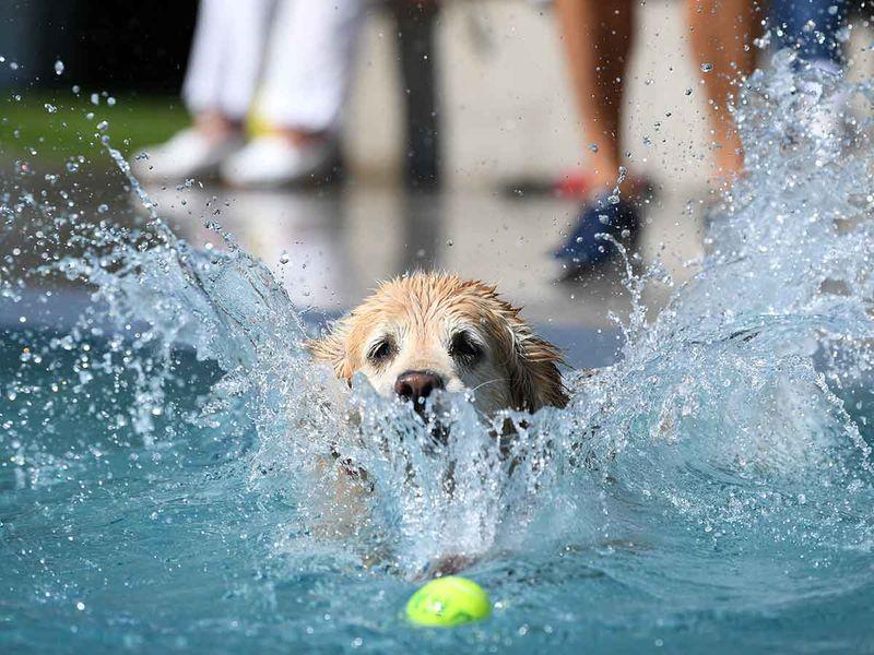 Dog swim day gallery