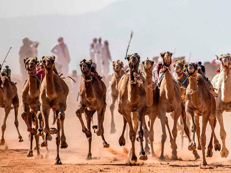 20200915 camel racing