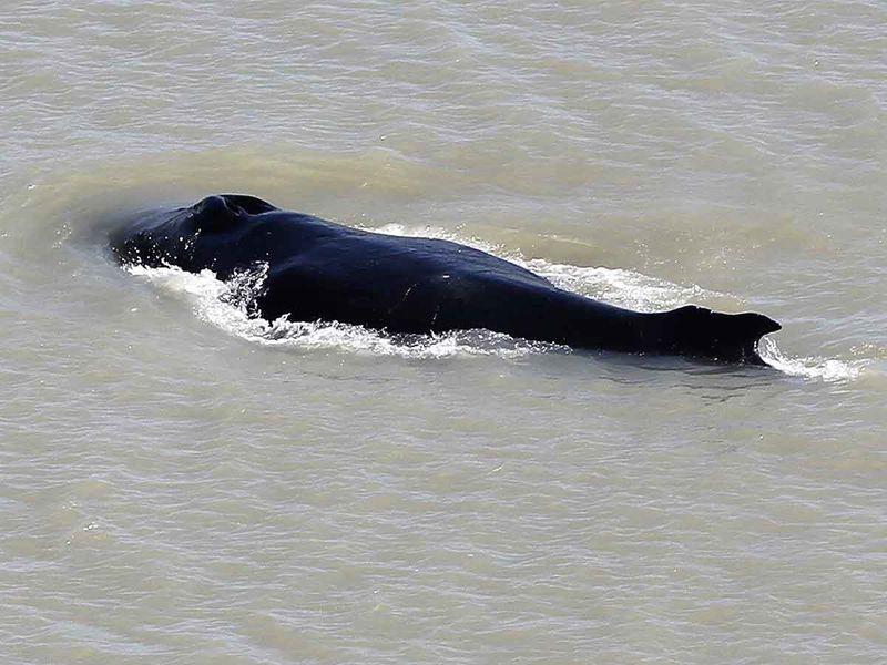 2020095 top news humpback whale