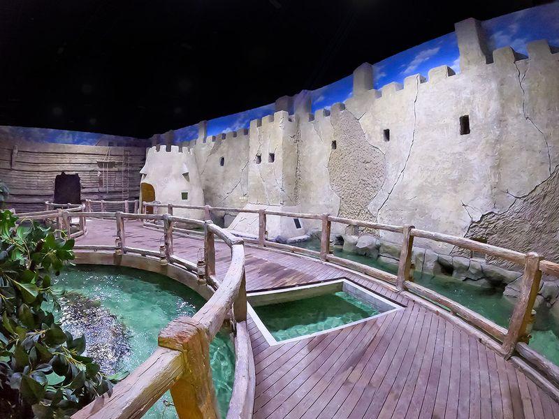 NAT TNA UAE's Natural Treasures Zone-1600171806481