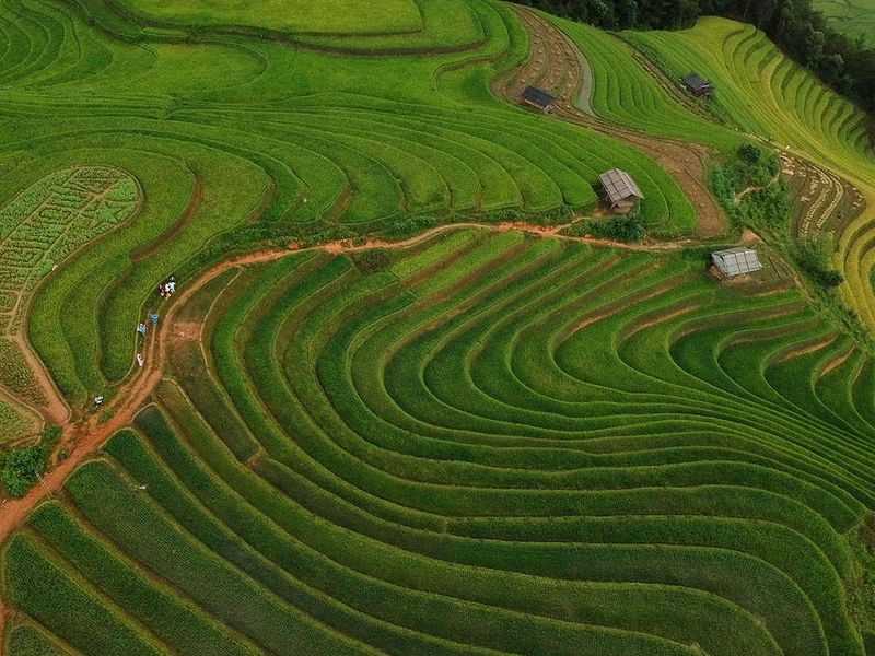 Vietnam rice fields gallery