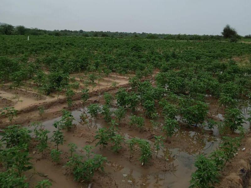 Pakistan: Sindh government builds dam in desert town near Indian border