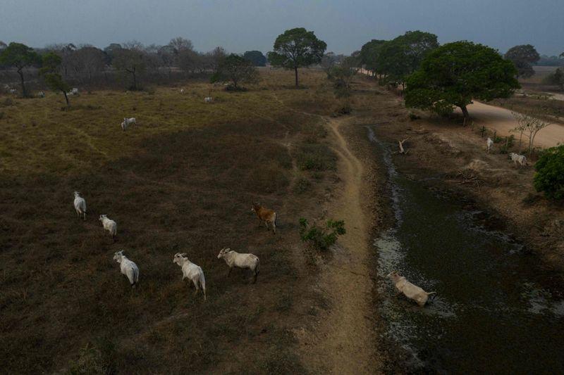 Race to rescue animals as Brazilian wetlands burn