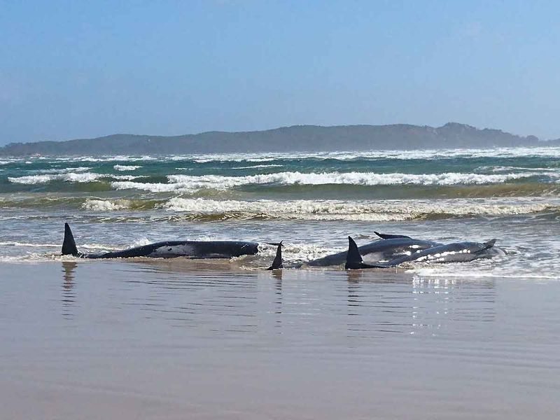 stranded whales gallery