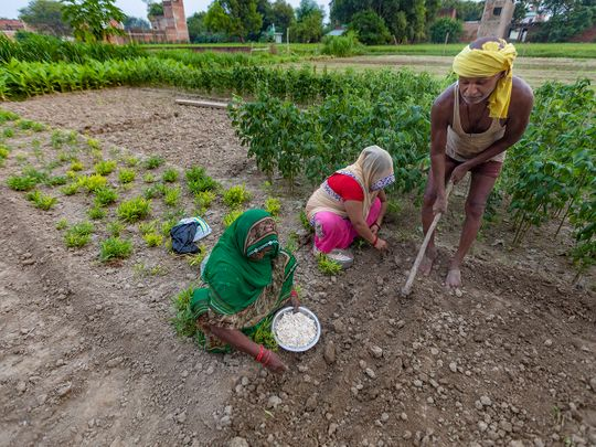 Stock India economy agriculture farmers