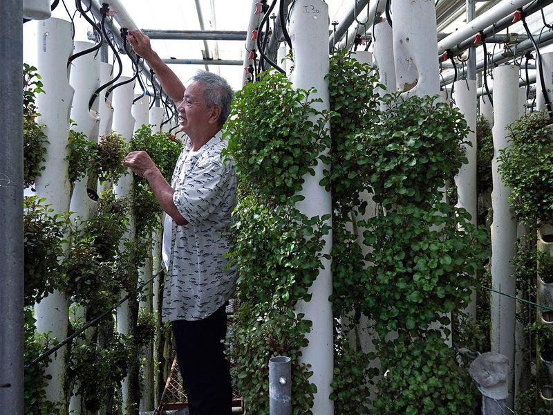Hong Kong hydroponics