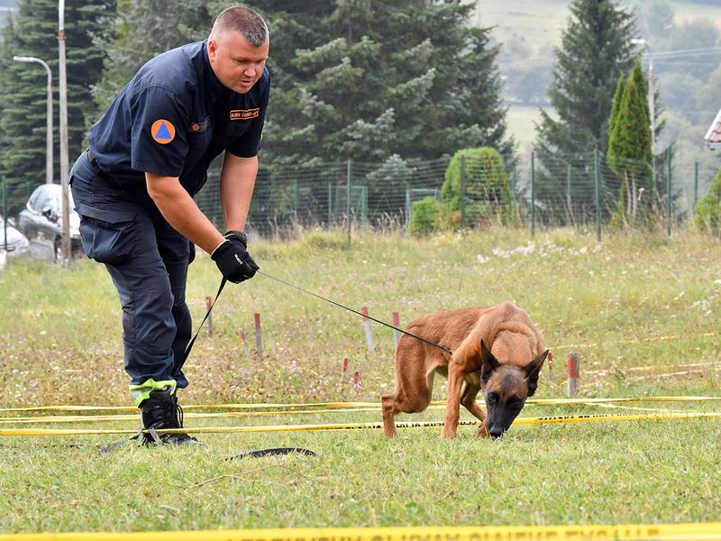 Mine-detecting dogs gallery