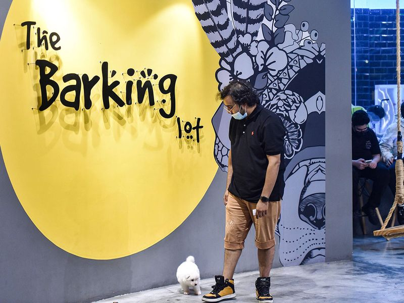 Saudi Barking Lot gallery