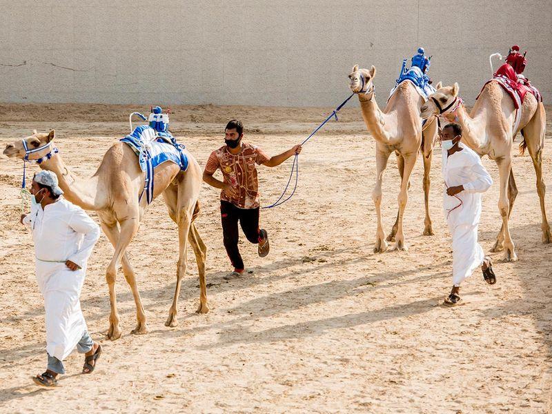Marmoum camel