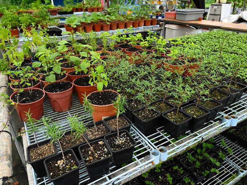 20201001 edible garden
