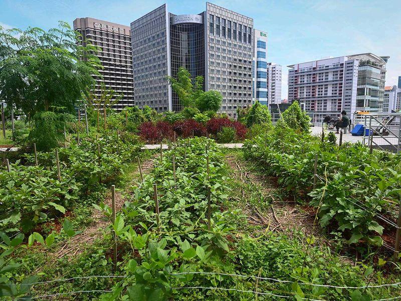 20201001 rooftop farming