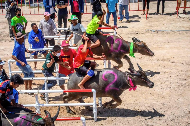 BUFFALO RACE 5-1601550479551