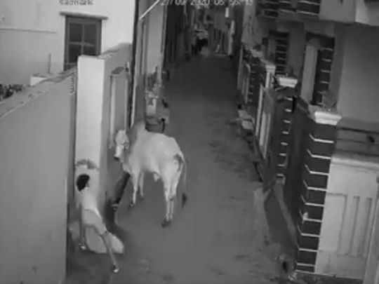 India: Boy saves grandmother from bull