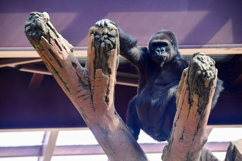 dubai zoo34-1601897478796