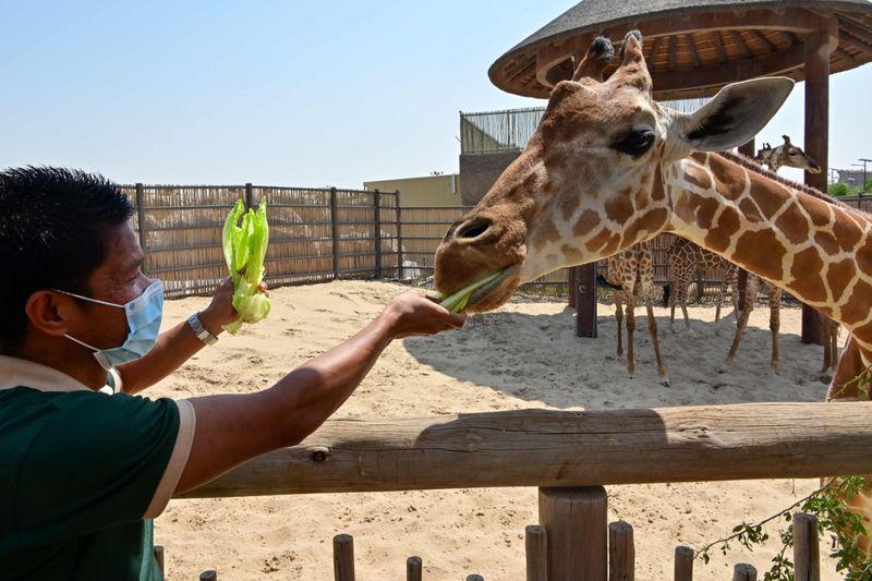 dubai zoo44-1601897491357
