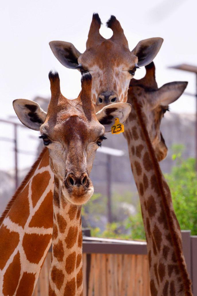dubai zoo66-1601897481357