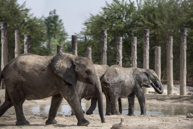 zoo 1-1601897512758