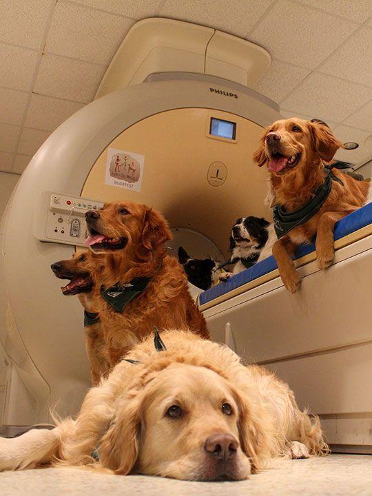 Dogs MRI gallery