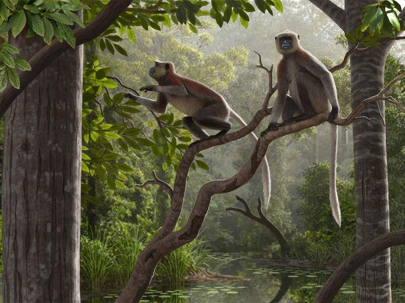 monkey fossils