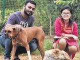 500 stray dogs wedding treat