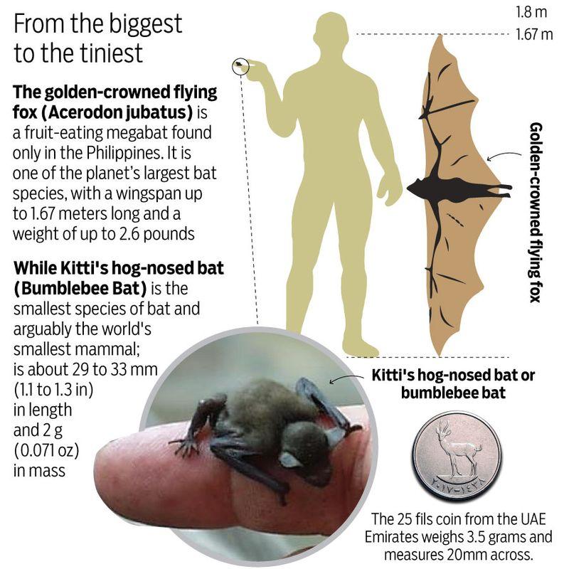 Bats bat sizes