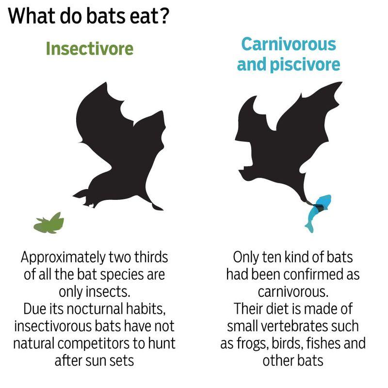 Bats eating