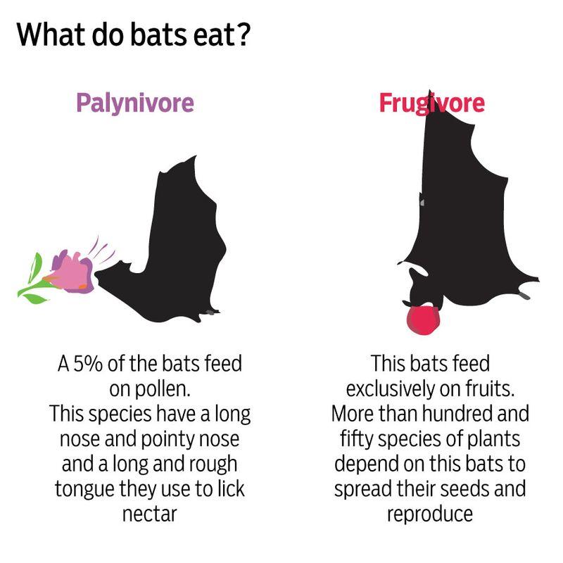 Bats eating bat food
