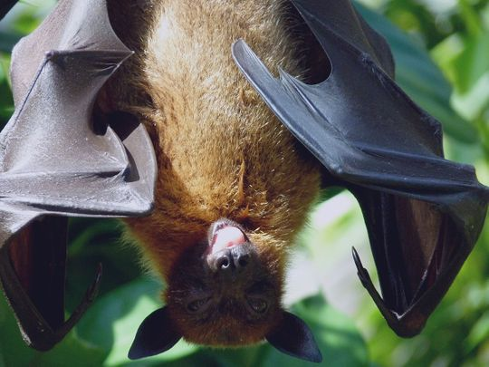 If you see bats, leave them alone: Dubai wildlife specialist
