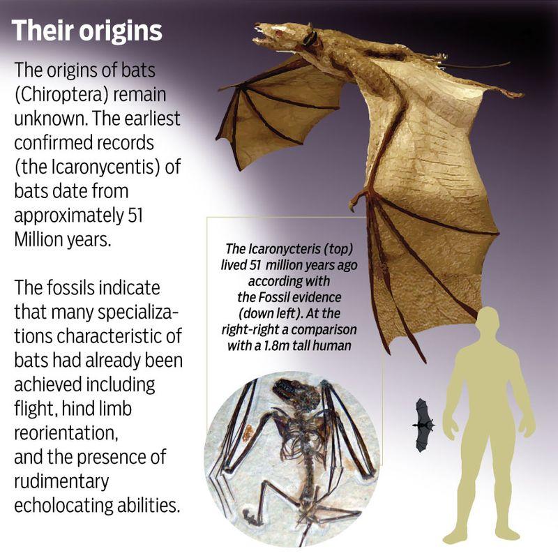 bat origins