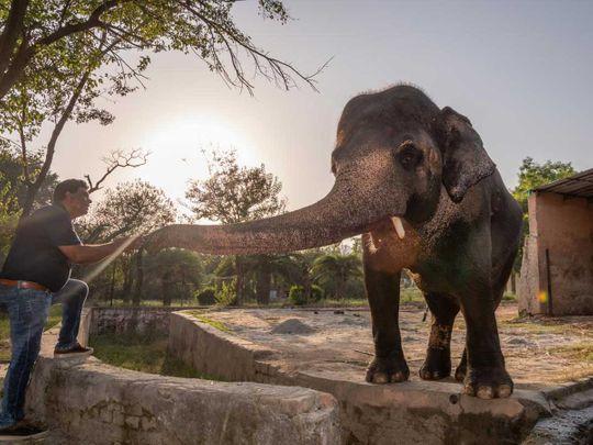 Dr. Amir Khalil, Kaavan elephant Pakistan