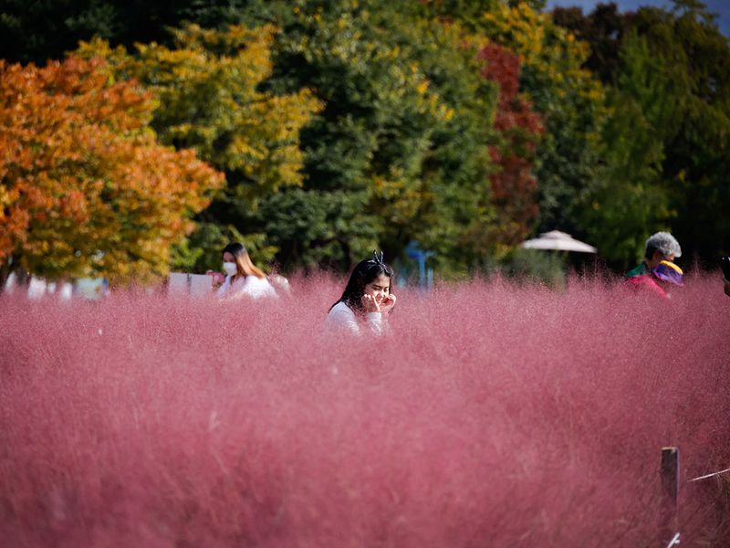 pink grass gallery