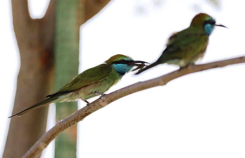 BIRD 6-1602677298175