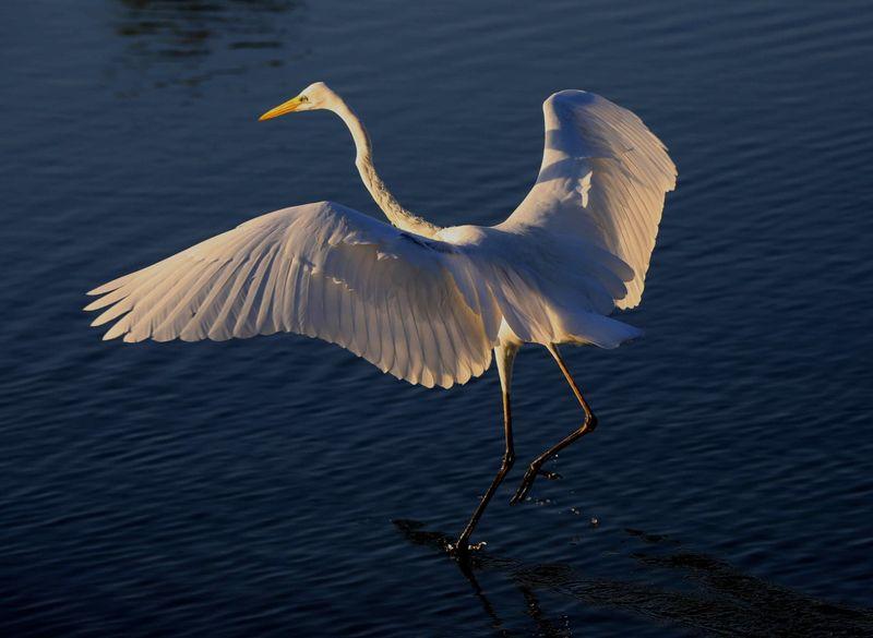 BIRD 7-1602677309443