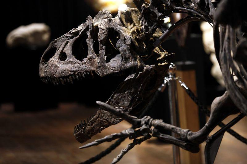 Copy of France_Dinosaur_Auction_44810.jpg-71a7e [1]-1602673797183