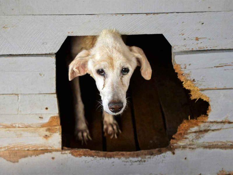 20201015 abandoned dog