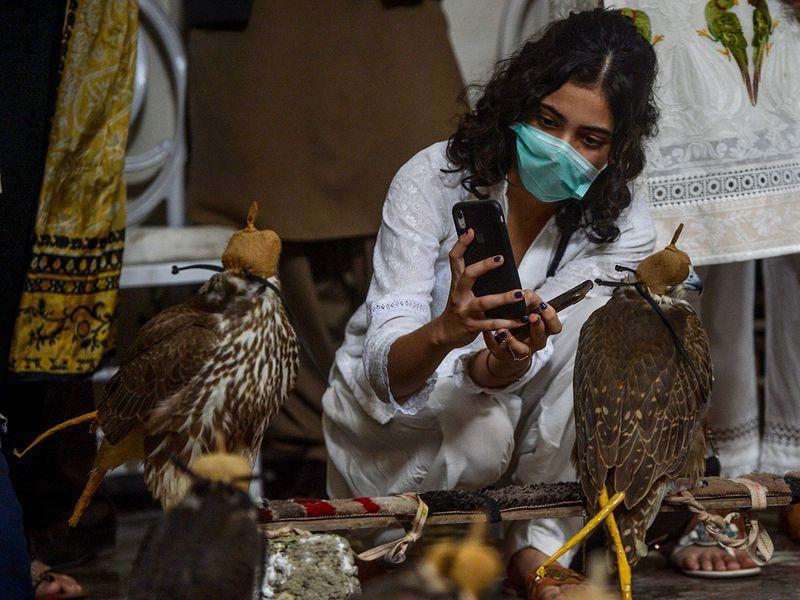 Pakistan smuggled falcons gallery