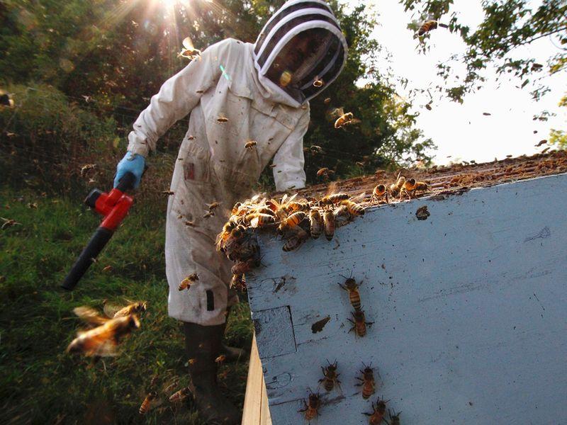 Beekeepers gallery