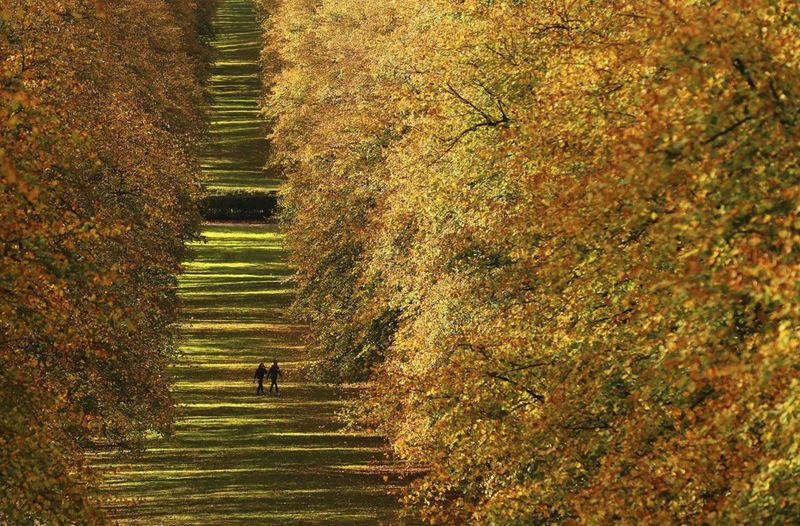 Copy of Britain_Autumn_53003.jpg-d846e-1603196027100