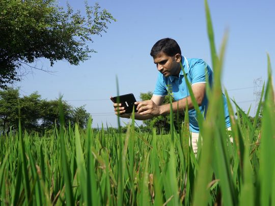 With Microsoft Cloud, CropData helping Indian farmers earn better